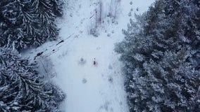 Antenne die van bruidegom de gelukkige bruid spinnen die haar houden in van hem dient de sparren net bos van het sneeuwweer tijde stock footage