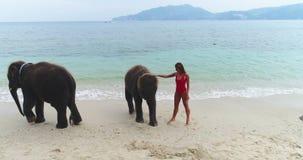 Antenne: Een meisje in het rode zwempak stellen naast olifanten op het strand stock footage