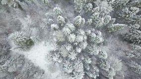 ANTENNE: Fliegen über dem schneebedeckten Wald und den Hügeln stock footage