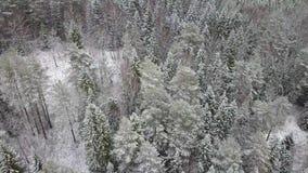 ANTENNE: Fliegen über dem schneebedeckten Wald und den Hügeln stock video footage