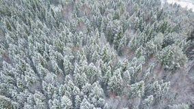 ANTENNE: Fliegen über dem schneebedeckten Wald und den Hügeln stock video