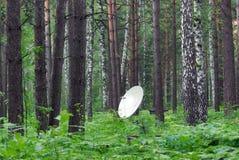 Antenne im Wald lizenzfreies stockfoto