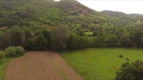 Antenne naar het bos door de gebieden en de weiden in de de zomertijd stock footage