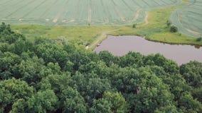 ANTENNE: Sonnenuntergang über See und Wald 4k stock video footage