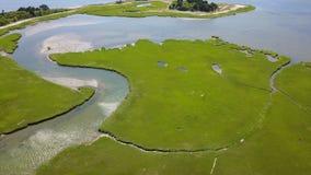Antenne van Cape Cod Marsh Habitat stock footage