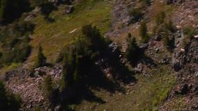 Antenne van de kudde die van de berggeit wordt geschoten stock videobeelden