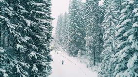 Antenne van een persoon wordt geschoten die in bos in de sneeuw wandelen die Royalty-vrije Stock Afbeeldingen