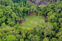 Antenne van gesneden bomen op grond in regenwoud Stock Afbeelding