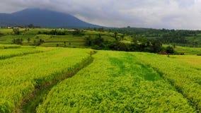 Antenne van Groen het Landdorp dat van Jatiluwih wordt geschoten Overweldigende rijstterrassen op het eiland van Bali En vrouw di stock video