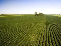 Antenne van landbouwsojagebieden dat wordt geschoten Stock Afbeelding