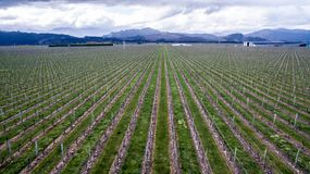 Antenne van wijngaarden in het Marlborough-gebied in Nieuw Zeeland stock afbeeldingen