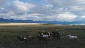 Antenne von den Pferden, die durch schöne sonnige Bergwiesefrühlings-Naturtiere laufen, gestalten Zeitlupe 4k landschaftlich stock footage