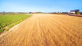 Antenne von einem Weizen- und Weinfeld Portugal Lizenzfreies Stockbild