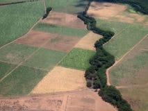Antenne von Sugar Cane-Feldern von verschiedenen Stadien des Alters Lizenzfreie Stockfotos