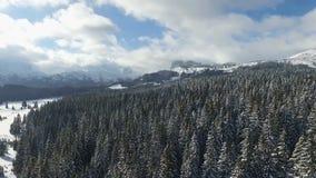 ANTENNE: Wald des verschneiten Winters stock video