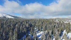 ANTENNE: Wald des verschneiten Winters stock video footage