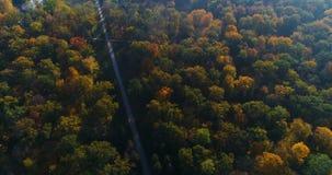 Antennen parkerar skoghöstsolen arkivfilmer