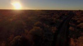 Antennen sköt av djungeln och savannen av Namibia under solnedgång lager videofilmer