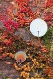 Antennes paraboliques sur un mur Images stock