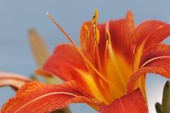 Antennes sur une fleur Photographie stock libre de droits