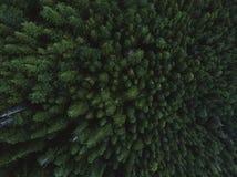 Antennskott av trädblast royaltyfria foton