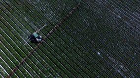 Antennskott av traktoren som bevattnar kolonifältet lager videofilmer