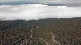 Antennskott ovanför att flyga för oklarheter Grön skog som sjunker i molnen Kanariefågelöar, Teide vulkan lager videofilmer