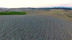 Antennskott, ursnyggt tuscany kullelandskap med solnedgångljus, tuscany flygparad lager videofilmer