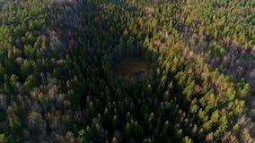 Antennskottlandskap över skogträsket i mitt av skogen arkivfilmer
