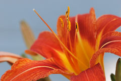 Anteny na kwiacie Fotografia Royalty Free