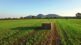 Anteny zieleni pola z belami słoma zbiory wideo