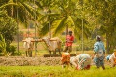 ` Anterior s ocupado en el cultivo durante mañana Fotos de archivo libres de regalías
