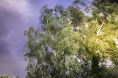 Antes de la tormenta Fotos de archivo