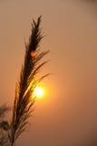Antes de puesta del sol Imagen de archivo
