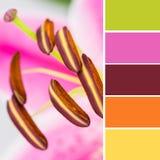 Anthères de lis et échantillons de couleur Image stock