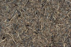 Anthil background. Anthill background of Formica sp Stock Image