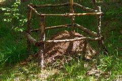 Anthill в лесе окружен загородкой стоковые изображения rf