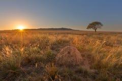 Anthill, дерево и заход солнца Стоковая Фотография