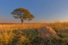Anthill и дерево Стоковое Изображение