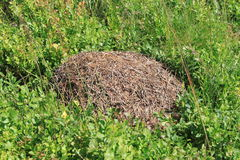 Anthill royalty free stock photography