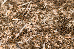 Anthill Royalty Free Stock Image