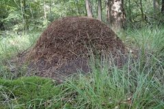 Anthill Stock Image