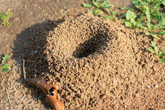 Free Anthill Royalty Free Stock Photography - 43350757