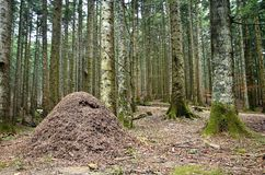 Anthill Stock Photos