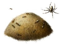 Anthill with ants. Spider. Stock Photo