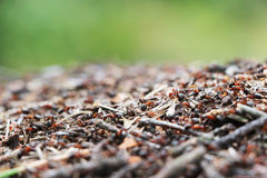 Anthill ants work Stock Photo