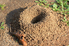 Anthill Stock Images