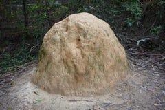 Termite hill in Australian bushland stock image