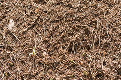 Anthill close-up with a red ants Royalty Free Stock Photos
