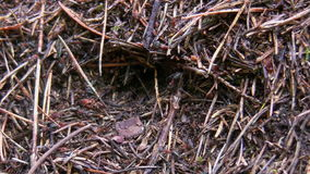 Anthill community close up stock footage